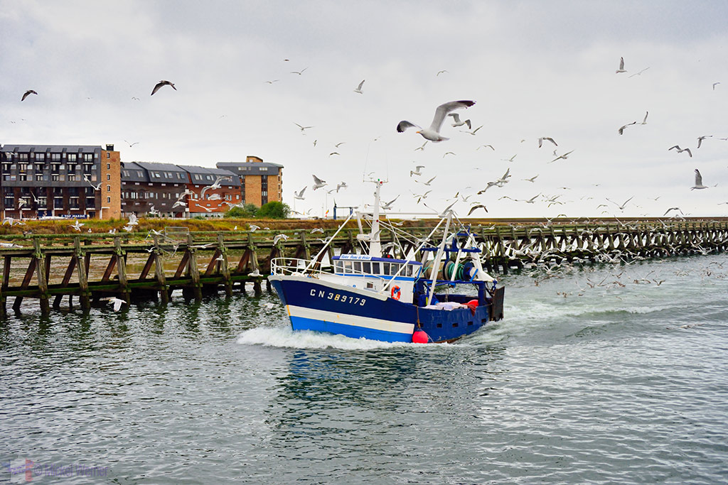 Seagulls following a trawler at the Trouville-sur-Mer harbour