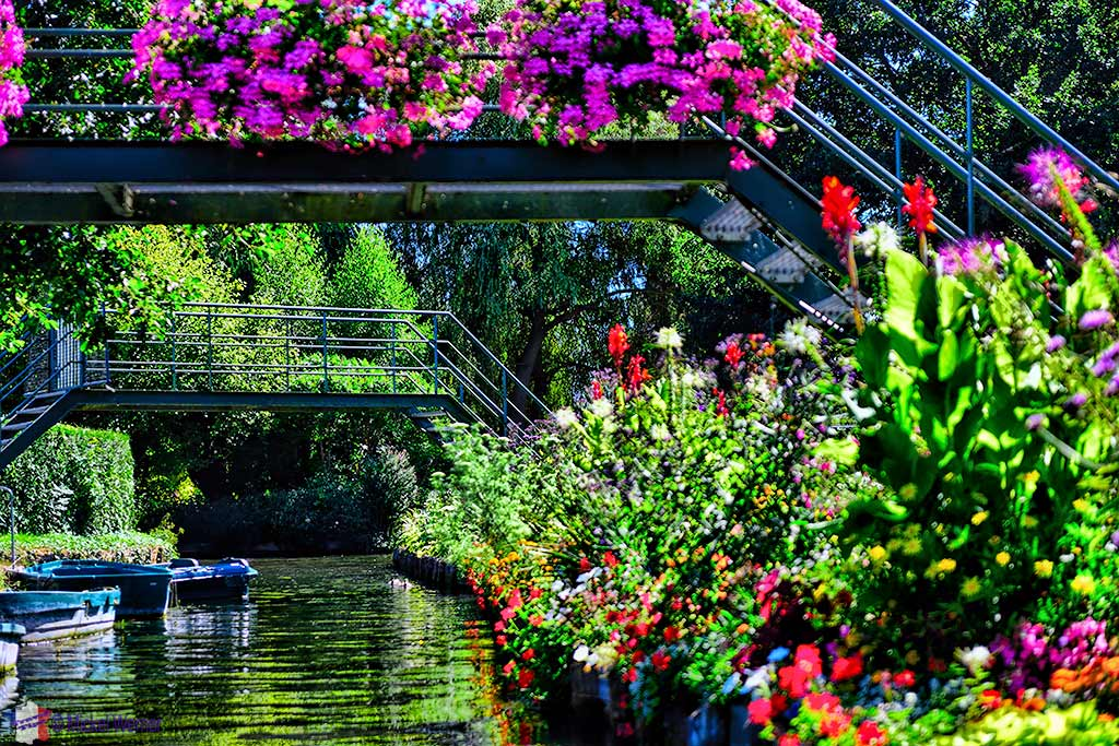 A tour of the Hortillonnages of Amiens on a small canal boat