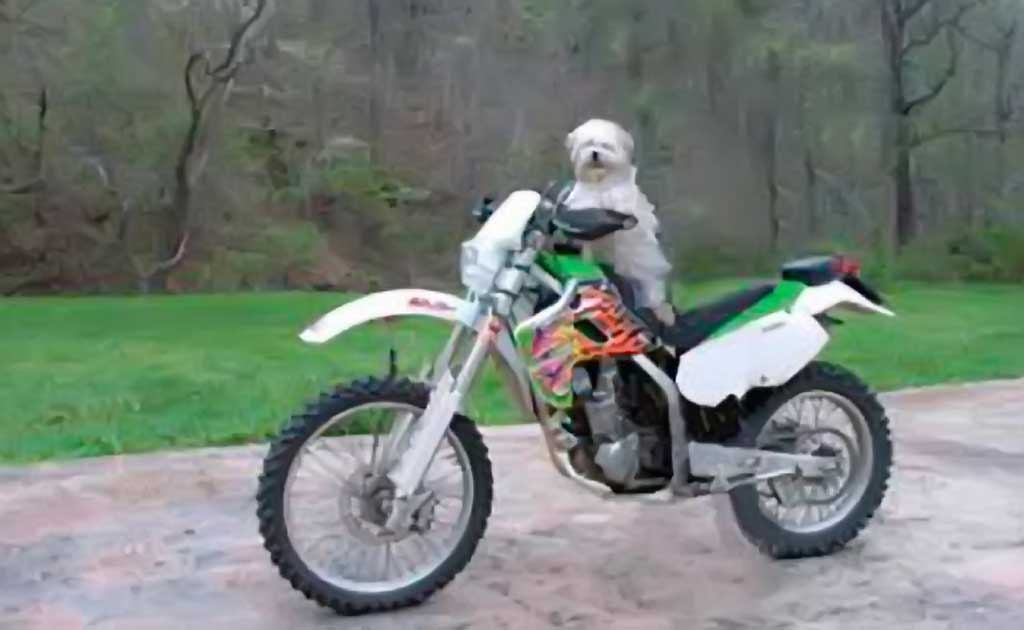 Be careful and use common sense with animals on motorcycles