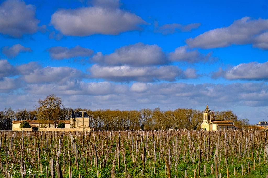 The grape fields of Chateau Palmer