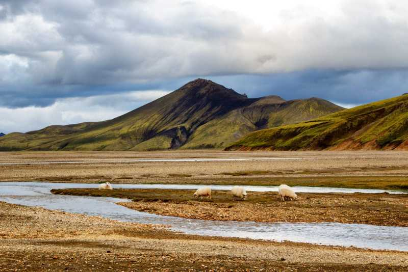 Quit school to travel? Iceland could be on your list.
