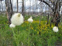 beargrass – Travel. Garden. Eat.