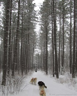 Dog sledding in the Boundary Waters (February)