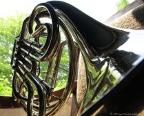 french-horn-3.jpg