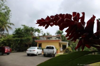 The Ceiba Country Inn