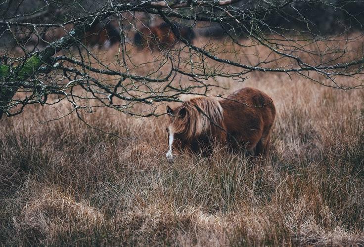 wilde paarden - Millingen aan de Rijn - Ontdek deze onontdekte parel in eigen land - reisblog TravelGloss