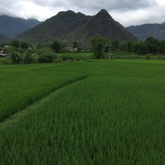 vakantie-vietnam-highlights-reistips-TravelGloss-rijstvelden