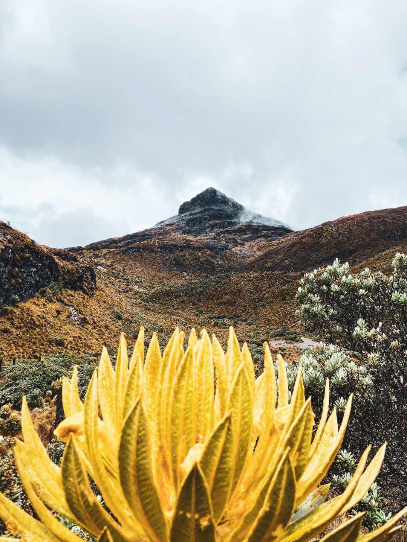 Paramillo del Cisne Parque Los Nevados