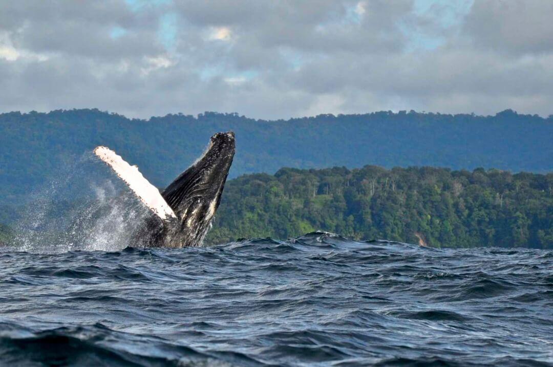 Nuquí temporada de ballenas