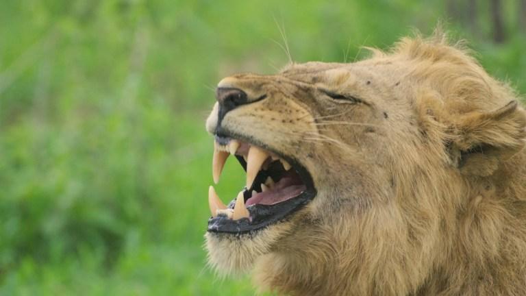 Tanzania: Mikumi e Ruaha National Park