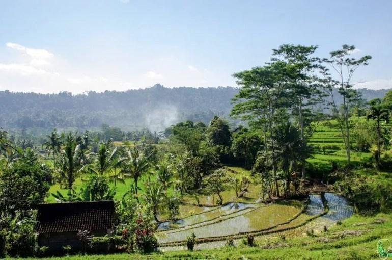 Risaie di Sideman, Bali