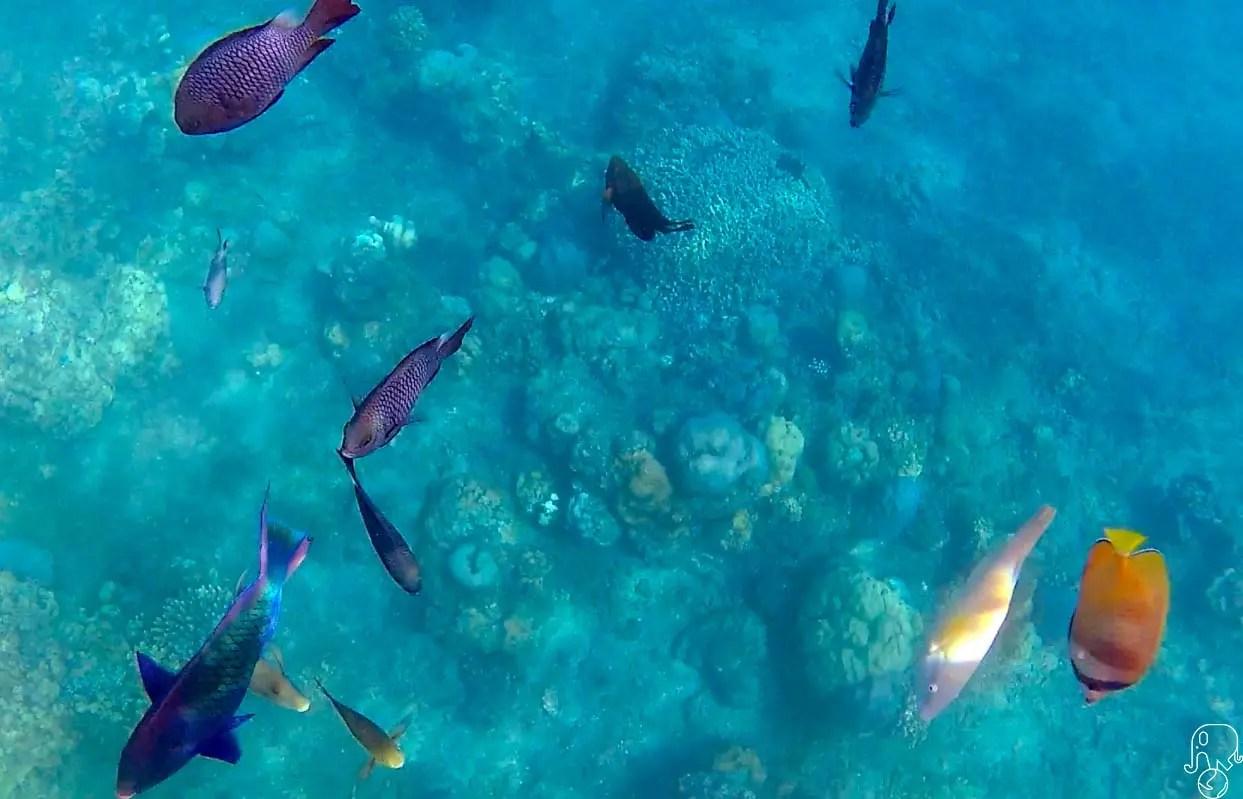 Snorkeling ad Amed, Bali