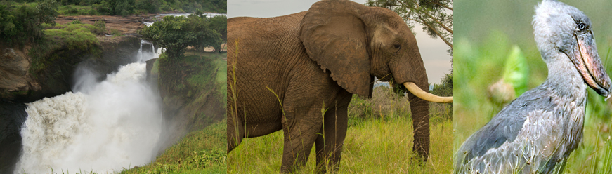 uganda-tours-and-safaris