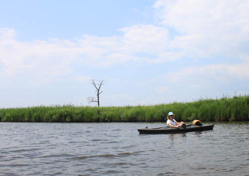 Paddling the Transquaking River