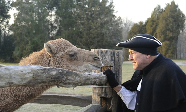 Aladdin the Camel at Mount Vernon