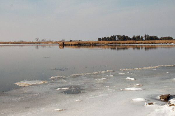 Eastern Neck Winter Landscape