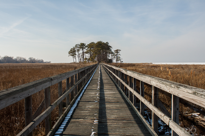 Boardwalk at Eastern Neck