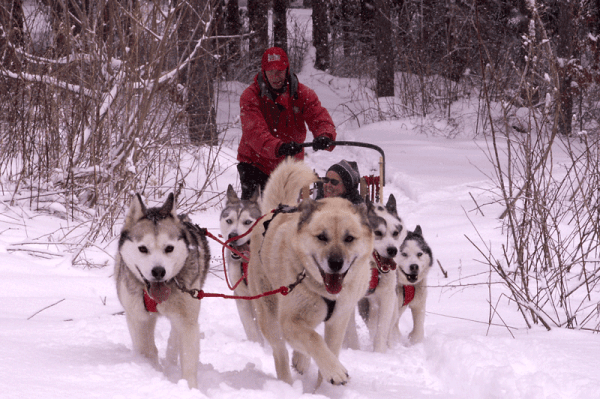 photo Courtesy of Husky Power Dog Sledding