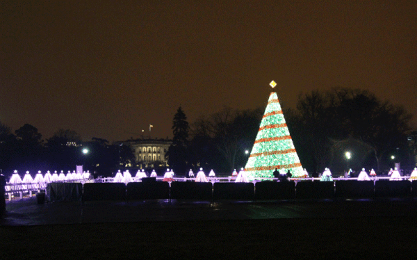 The National Tree, Washington DC