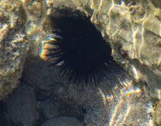 Sea urchins: beautiful but spiky!