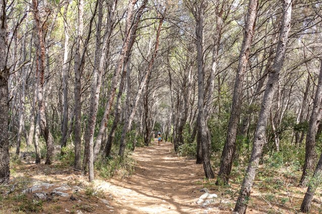 Gorgeous pathways lined with pine trees pave the way to each of the 4 beaches on Proizd.