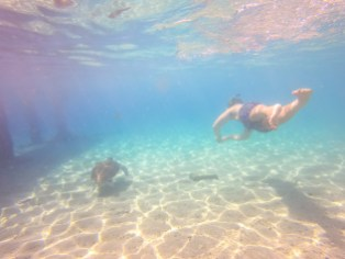 Top 10 Things to do in Curaçao - Swim with Sea Turtles Playa Grandi