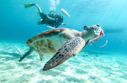 Sabana Westpunt Curaçao Vacation Rental