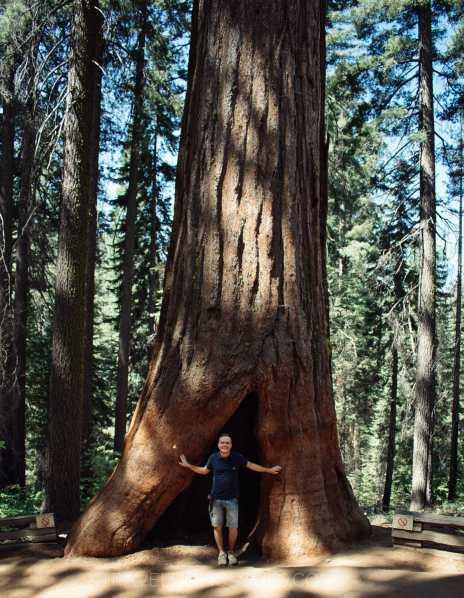 cosa vedere parco yosemite sequoie giganti