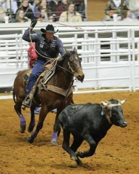 steer-roping