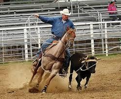 steer-roping1