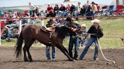 wild-horse-race