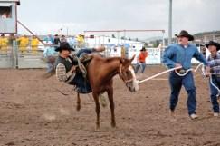 wild-horse-racing-2