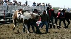 wild-horse-racing-3