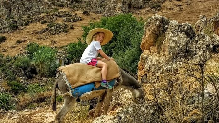phoebe donkey.jpg