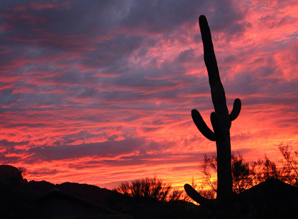 שקיעה עם קקטוס במדבר אריזונה