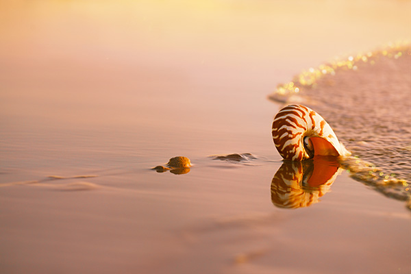 seashell nautilus on sea beach under sunset sun light