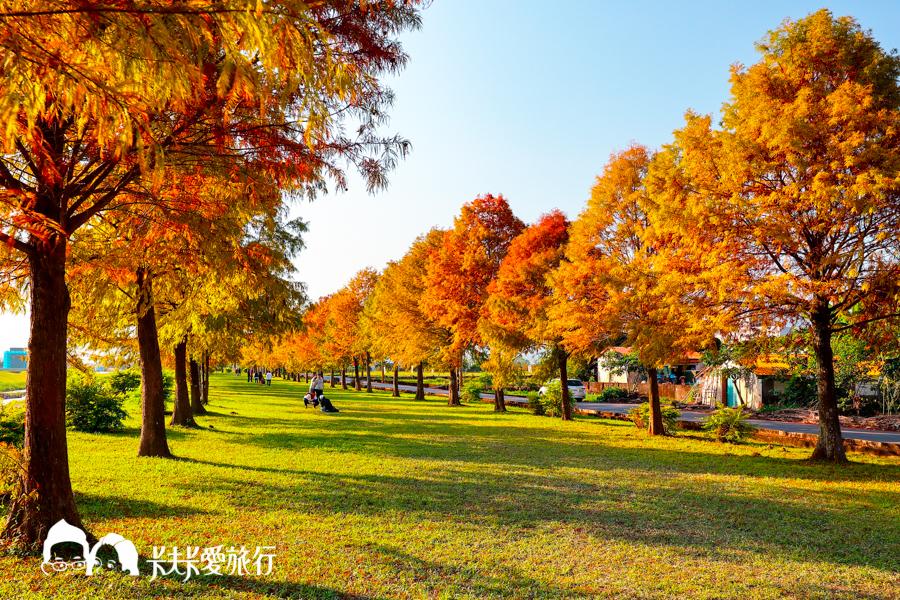 宜蘭 三星安農溪畔落羽松。秋天壯麗落羽松秘境 - 輕旅行
