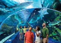 Gatlinburg Aquarium Coupons Ripley'