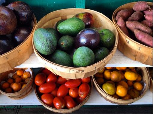 Maui's GMO Moratorium