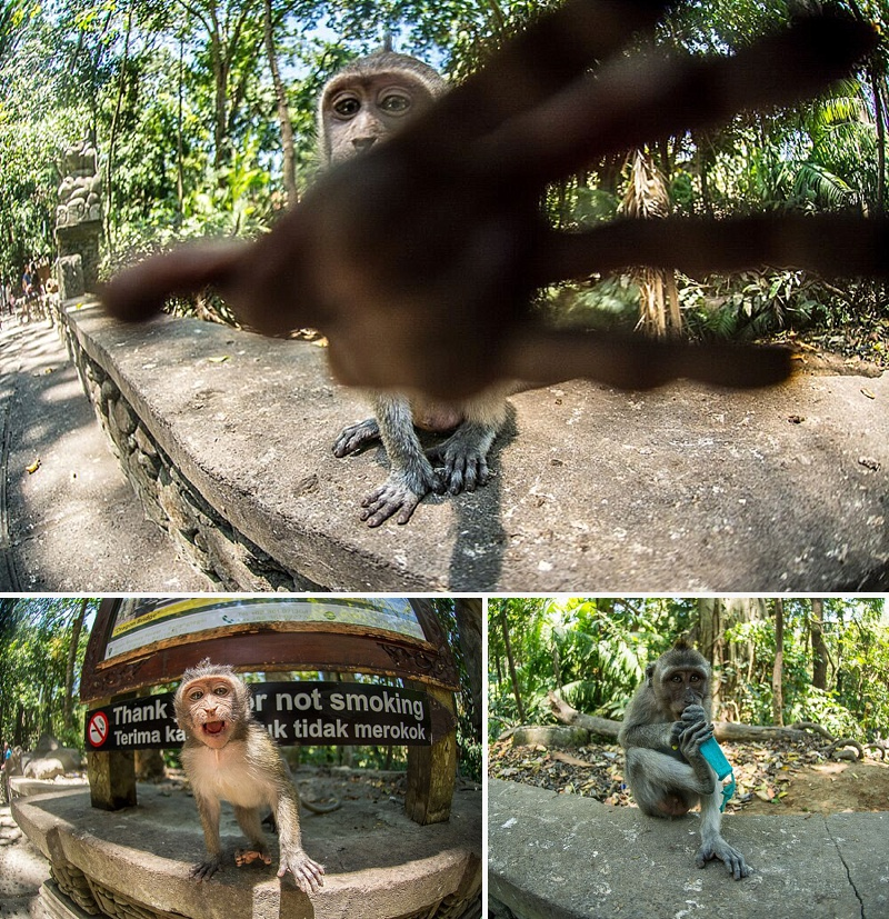 bali monkey forest sanctuary