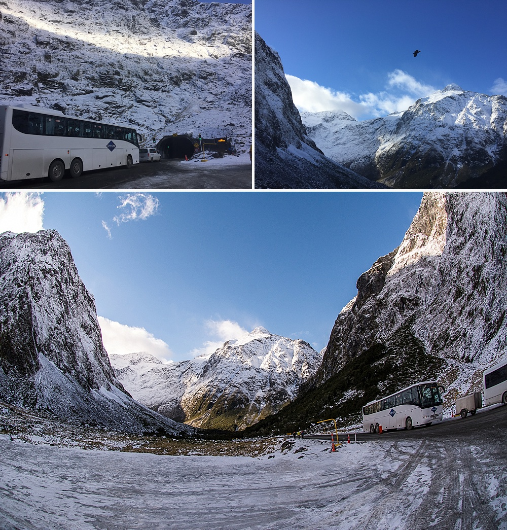 queenstown to milford sound tours