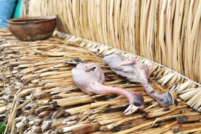 食用に処理済みの、ティティカカ湖に生息する水鳥