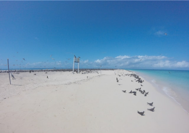 Birds at Michaelmas Cay, Great Barrier Reef