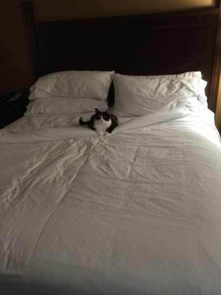 Cat on a hotel bed