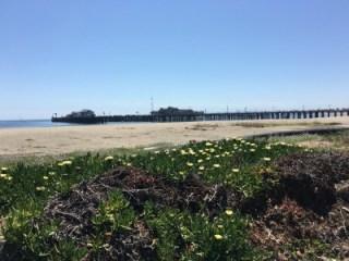 Beautiful Santa Barbara's Stearn's Wharf