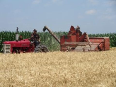 joe harvesting