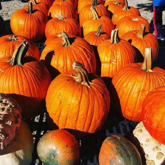 pumpkin choice