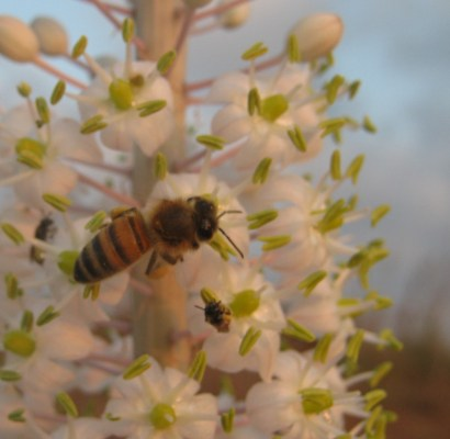 מתוק מדבש: מה היינו עושים ללא דבורים?