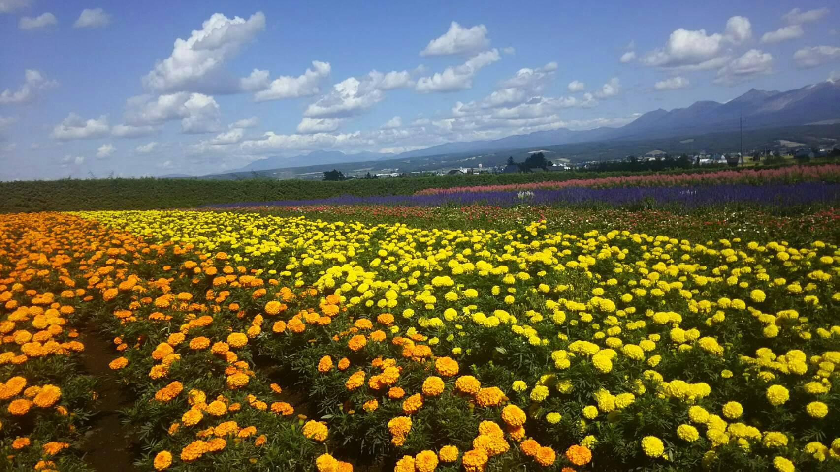 富良野でリゾートバイト in 北海道