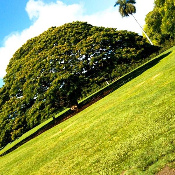 ハワイでJTBオアフ島一周ツアーに参加してみた!「タンタラスの丘」「ハレイワタウン」